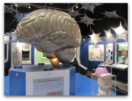 brain-museum-munich