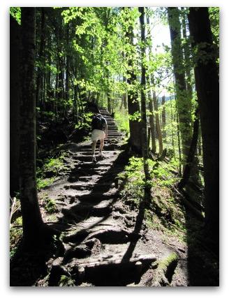 forest-near-garmisch