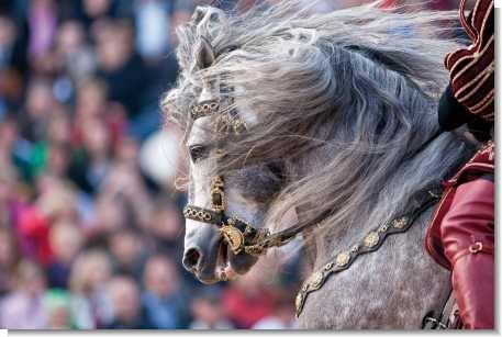 knight-on-horseback