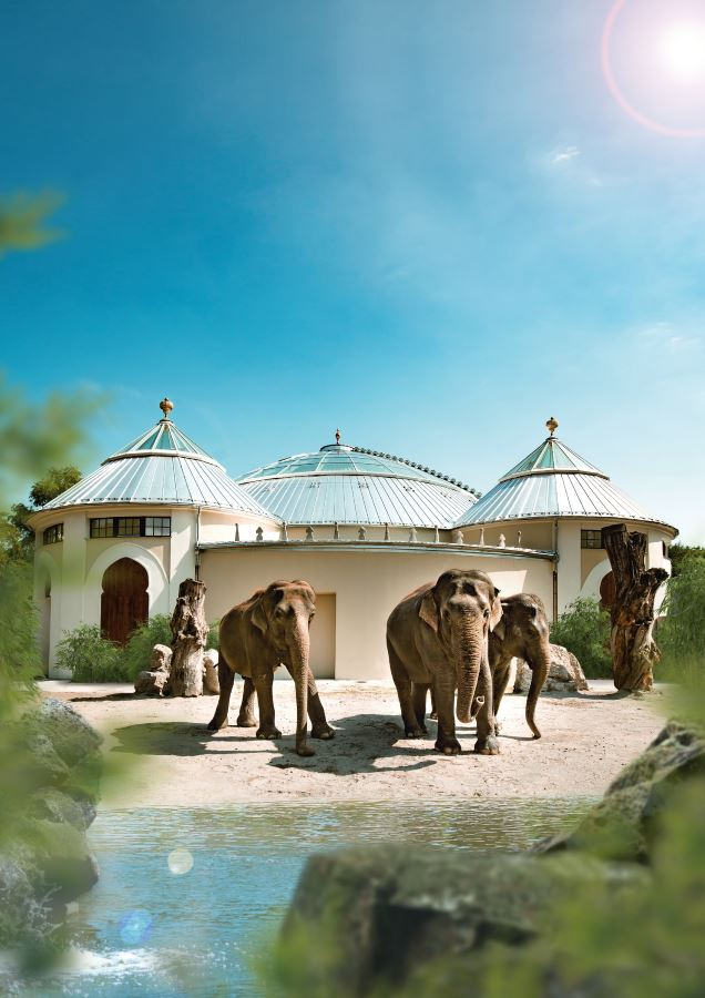 munich-zoo-elephants