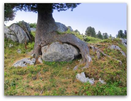 tree-in-alps