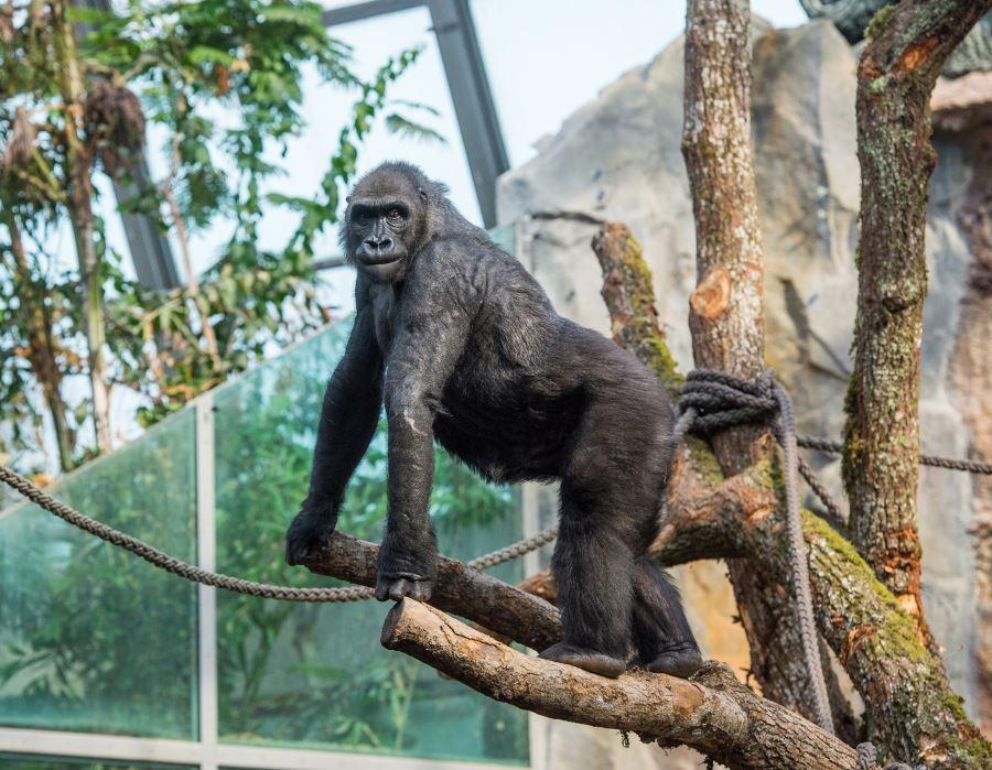 munich-zoo-ape